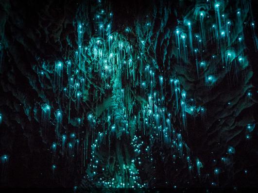 唯美萤火虫洞:成千上万照亮星空 你不可错过的美景!(组图)