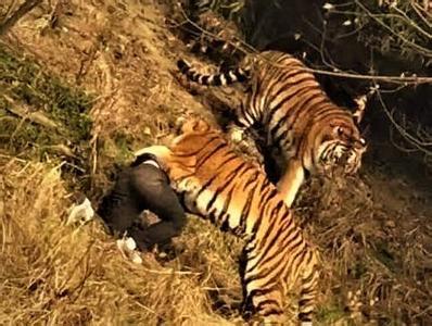 宁波老虎咬人动物园究竟该不该担责?